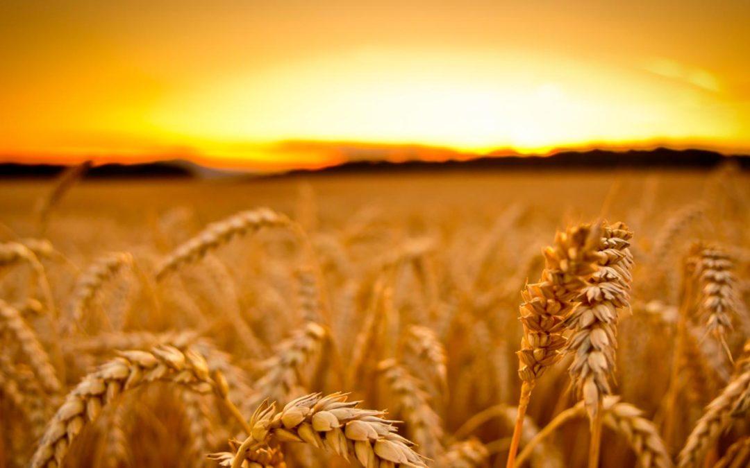 ¿Por qué transportamos cereal?